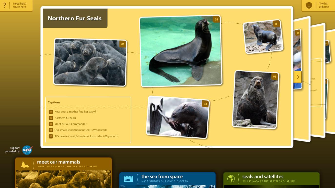 Detailed information on Northern Fur Seals.