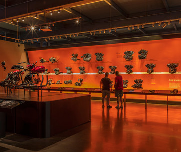 Harley-Davidson Engine Wall Experience